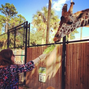 Feeding giraffes at Naples Zoo